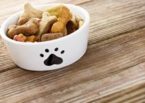 The Best Food for Your Dog – How to Avoid Allergies and Other Health Problems