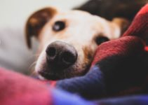 Why Old Dogs are Awake at Night