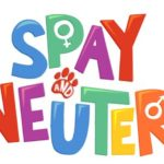 Neutering and Spaying a Beagle