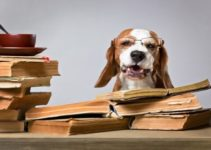 Are Beagles Smart? The Truth Revealed