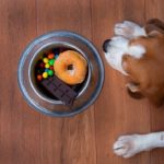 Foods to Avoid Feeding Your Beagle