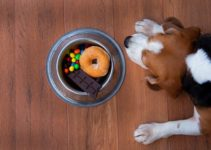 Foods to Avoid Feeding Your Beagle (A to Z)