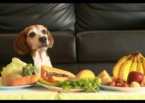 Are Fruits and Vegetables Good for Beagles? Check Out These 11